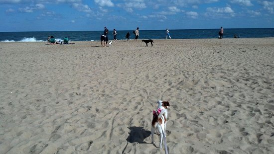 Dog Friendly Oct 1 To April 30 Picture Of Rehoboth Beach Boardwalk