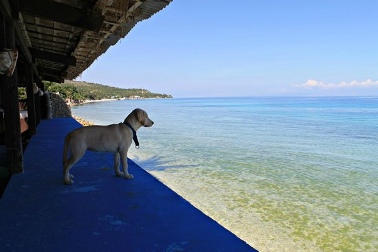 resident dog looking at the sea picture of lagunde beach resort rh tripadvisor com