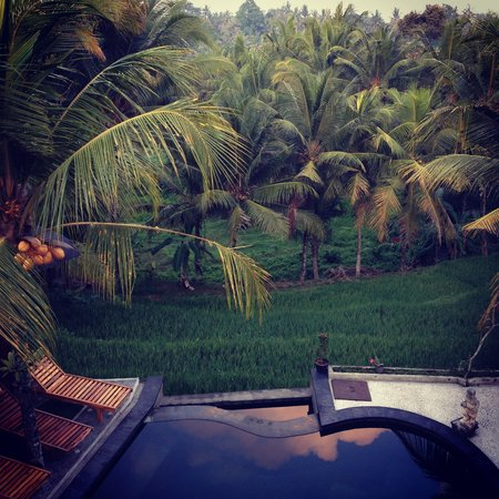 Dewa House Bisma: we loved the pool looking over the rice terrace