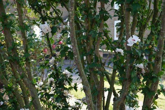 The Vines: Foliage