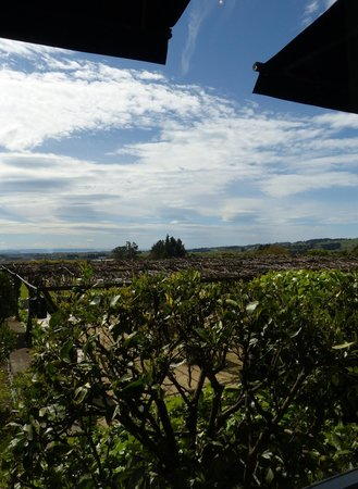 Black Barn Bistro: View of the vineyard from the bistro