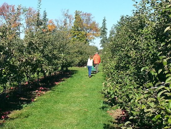 Frootogo Orchards: The orchard