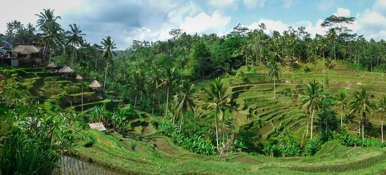 Bali Traditional Tours - Day Tours: The beautiful rice fields at Jatiluwih