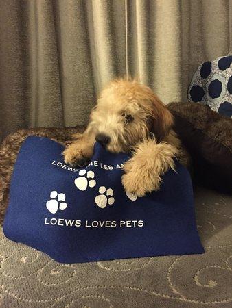 Loews Hotel Vogue: Murphy loves Loews