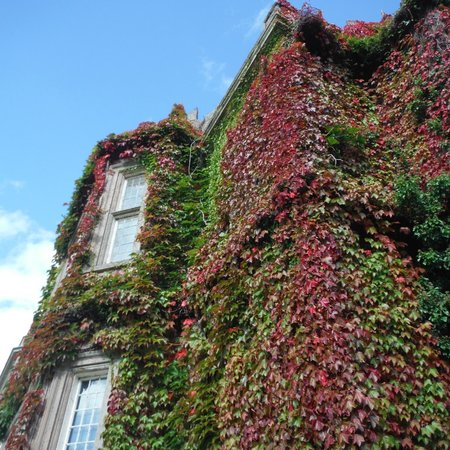 5d108726b1a98 Muckross House, Gardens & Traditional Farms: Ivied walls gaining their  autumn colors