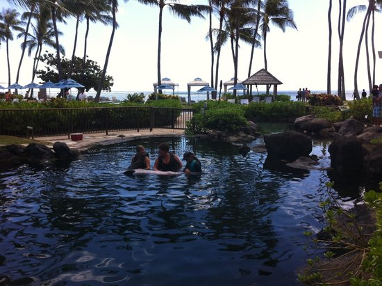 Dolphin Quest: In one of the lagoons with the dolphins