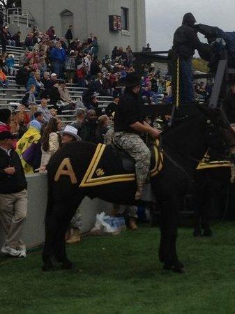 Michie Stadium: Army mule