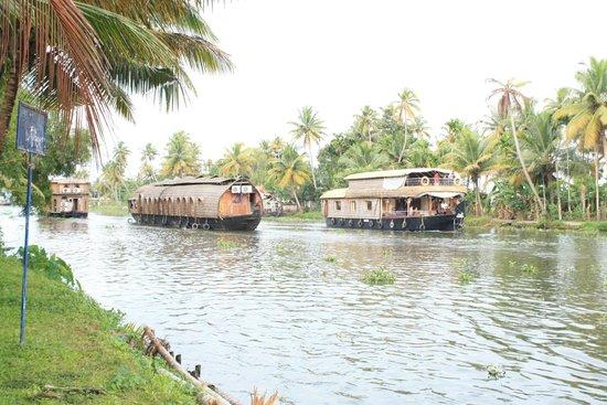 Palmgrove Lake Resort: lake view