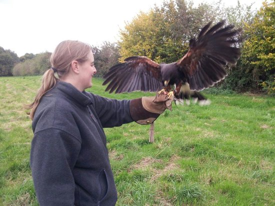 Vale Royal Falconry Centre: Hawk Walk around the field