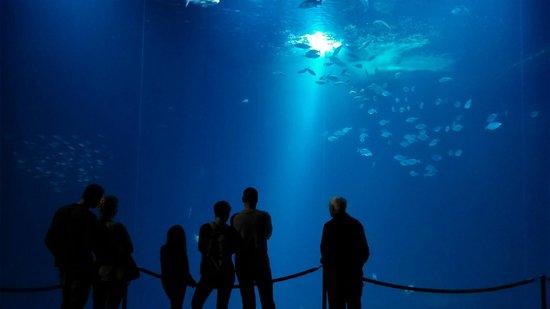 Ozeaneum : Traumhaft
