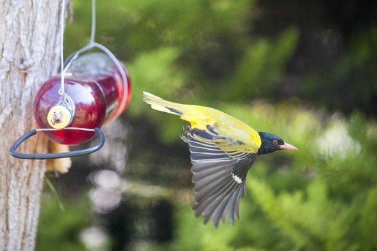 Bayside Lodge : birds