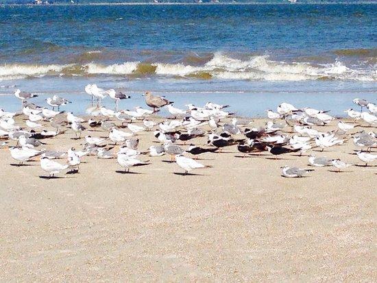 North Beach: Lots of shorebirds!