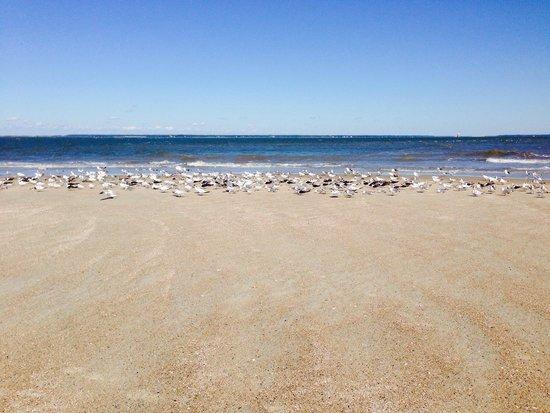 North Beach: Very approachable shorebirds!