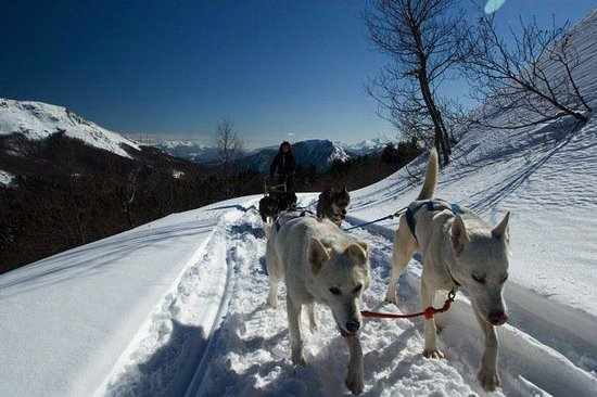 Athabaska Dogsledding - Scuola di Sleddog