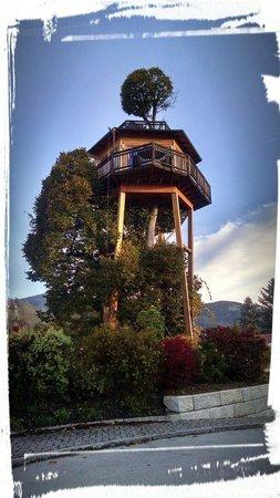 Prechtlhof: The room up the tree.