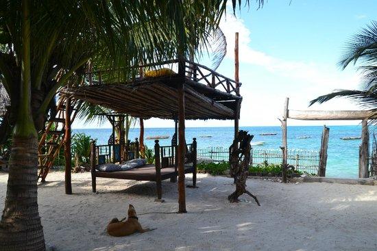 Mango Beach House: Liegen auf dem Gelände