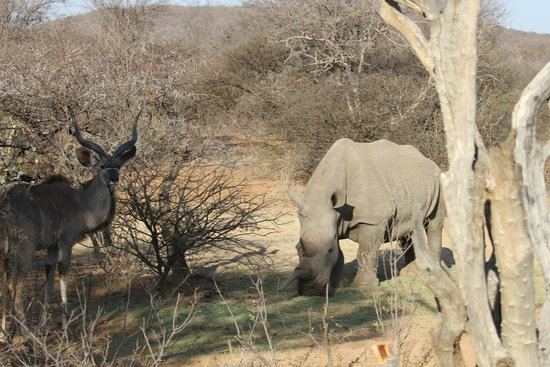 Mokolodi Nature Reserve : Great to see different types of animals enjoying the company of each other
