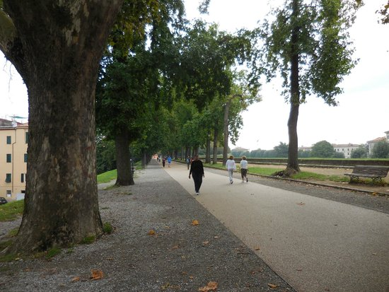 DriverinRome Transportation & Tours: Wall around Lucca as a park