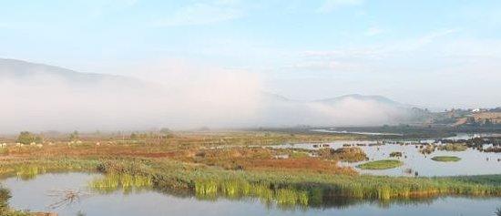 Urdaibai Bird Center: Foto de la laguna del BIRDCENTER con niebla. ¡Muy bonito!
