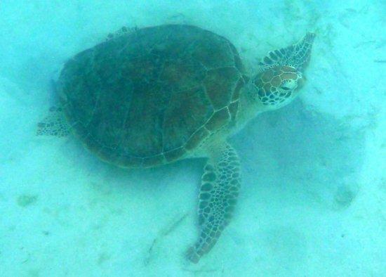 Lizard Island Resort: Turtle Beach
