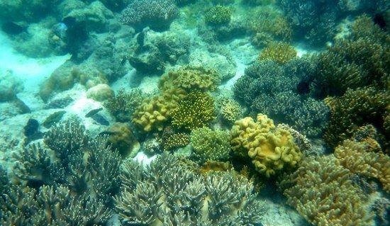 Lizard Island Resort: Snorkeling