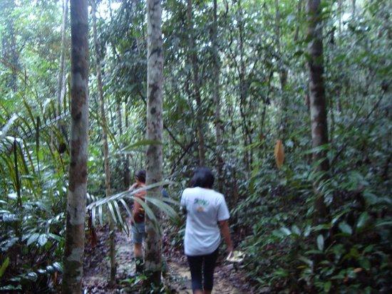 mini jardim botanico:Mini orquídea em viveiro – Foto de Jardim Botânico de Manaus – MUSA