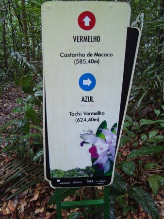 Manaus Botanical Garden - MUSA : Placas das árvores