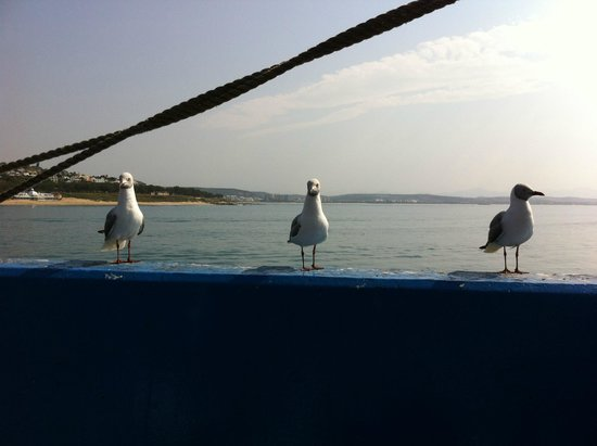 Sea Gypsy Cafe : Eating with the seagulls
