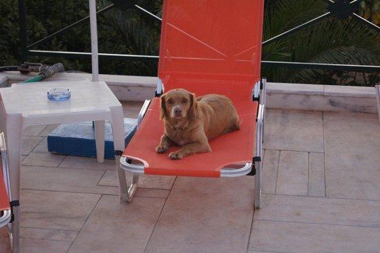 Aloni Suites: hotel dog