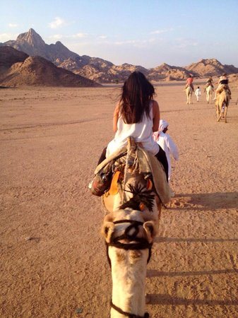 Sharm Life Day Tours: Camel ride to the Bedouin camp