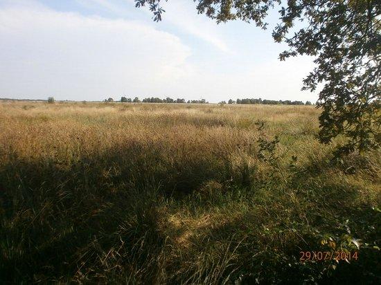 Dornum, Германия: Hochmoor ewiges Meer