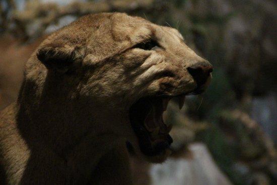Alpen Wildpark: morto