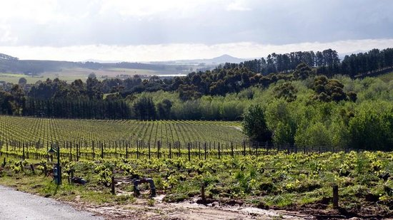 Marianne Wine Estate Guesthouse : The scenery