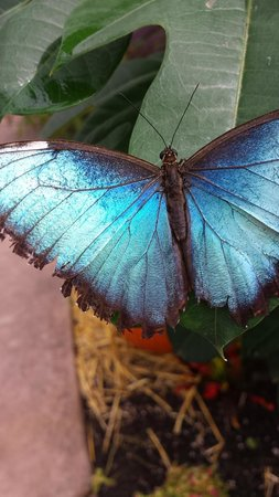 Butterfly Wonderland: beautiful