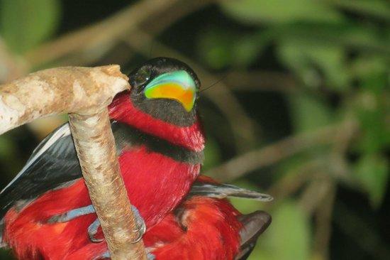 Sukau Greenview Bed & Breakfast : Avistamiento de ave