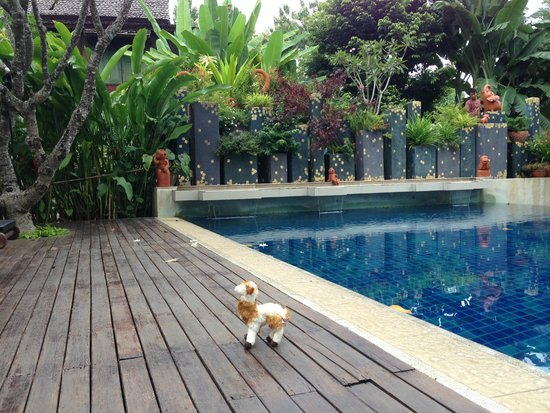 Lanna Dusita Boutique Resort by Andacura: pool and FD
