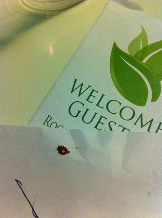 Best Host Inn: dead bed bug proof