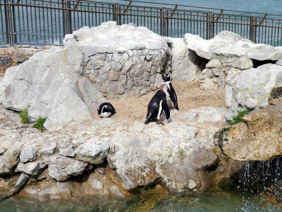 Pinginos en la Pennsula de la Magdalena Picture of Peninsula of