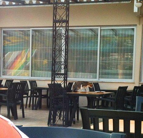 Belkon Club Hotel: cats eating
