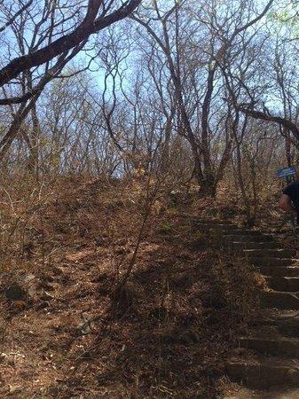 Virgen de los Tres Cerritos: mas del sendero hacia la base del cerro