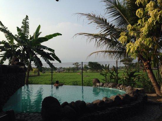 Tembi Rumah Budaya: Pool and view