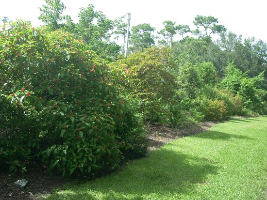 Coral Pine Park: Butterfly Garden
