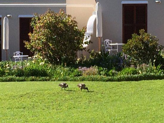 Glen Avon Lodge : Garden at the terrace