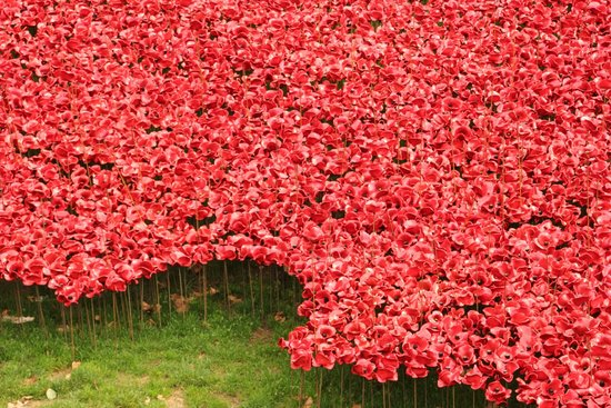 River Of Poppies Picture Of Tower Of London London TripAdvisor - Tower of london river of poppies