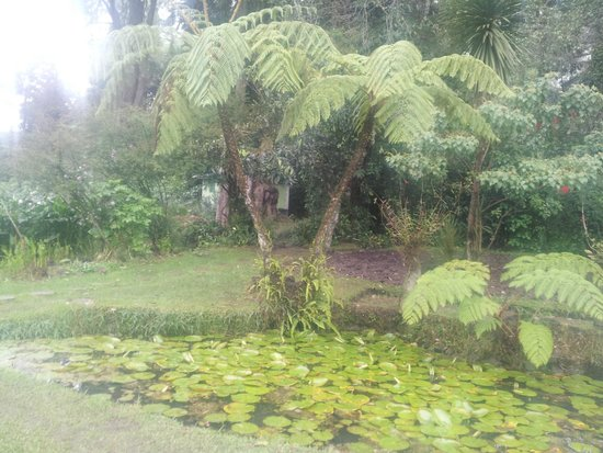 Victoria Park of Nuwara Eliya: Fern Trees..