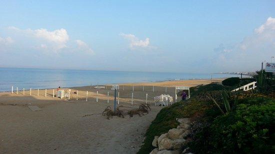 Hotel Mida : spiaggia al mattino presto