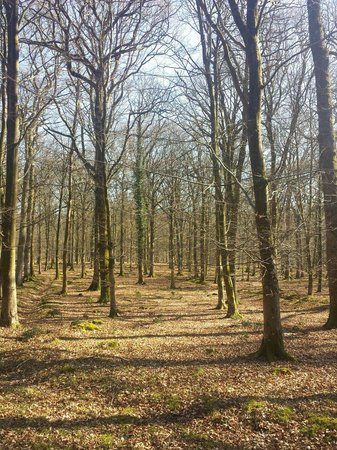 Green Hill Farm Camping & Caravan Park: In the new forest top of Nomads land
