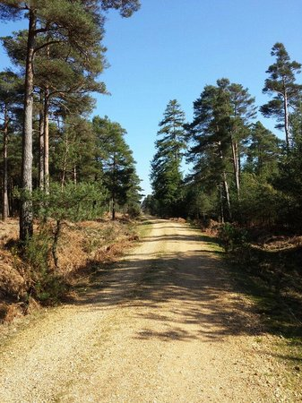 Green Hill Farm Camping & Caravan Park: Cycles track above Nomads land in the New forest