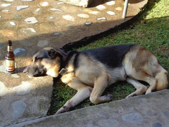 Hotel Rainbow Village: Wachhund Rex, zustädig für die Sicherheit