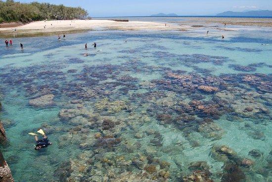 Big Cat Green Island Reef Cruises - Day Tour: low tide
